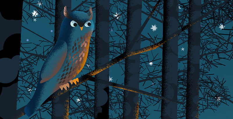 Bear and Fox picture book illustration, starry sky and an owl in the forest